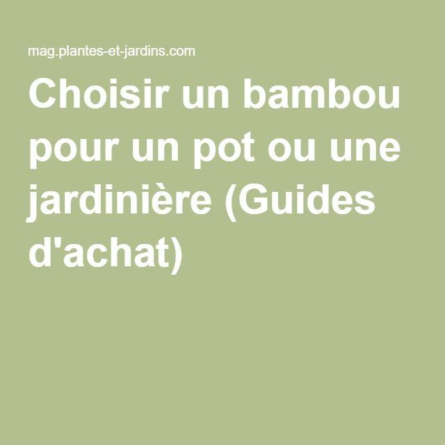 Choisir un bambou pour un pot ou une jardinière (Guides d'achat)