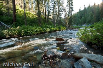 Stanislaus forest - Google Search