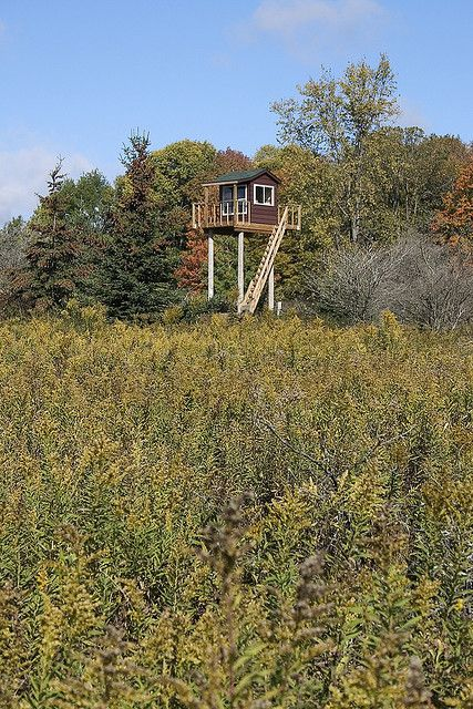 21 Best Images About Amazing Deer Blinds On Pinterest