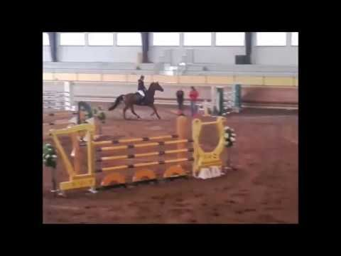 Jumping Horse for Sale: Lexington E.H. Holstein Gelding by Lordanos x Ca...