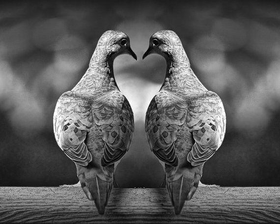 Dove Love Birds Romancing with Heart Shape by RandyNyhofPhotos