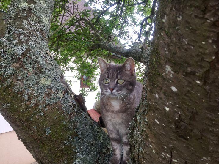 Dans mon arbre !