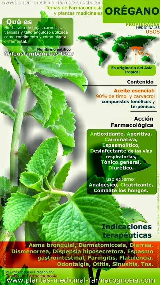 Todo sobre huerto ecológico, agricultura sostenible, huerto urbano , árboles y aromáticas. Siembra tomates y cosecha verduras.