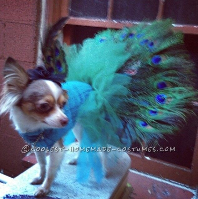 coolest homemade peacock costume for pet dog - Halloween Costume For Small Dogs