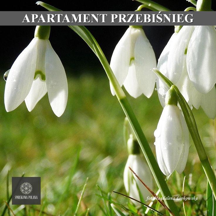 Apartament Przebiśnieg - zapraszamy! #poland #polska #malopolska #zakopane #mountain #tatry #place #spring #wiosna #destination