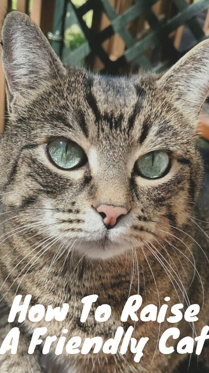 How To Raise A Friendly Cat In 2020 Cats Mother Cat Beauty Animals
