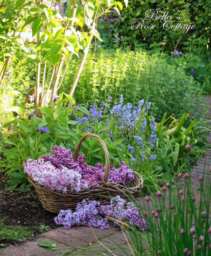 Bella's Rose Cottage: Love of Lilacs...