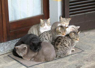 Animali mobili ~ Real animal furniture animal furniture animali e