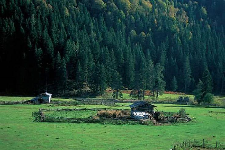 Ülkemizdeki Milli Parklar ,bol görselli,Özelliği: Küre Dağları Milli Parkı Batı Karadeniz Bölgesinin Küre Dağları üzerinde zengin ağaç çeşitliliği, Flora ve Fauna ile yaban hayatına sahiptir.Kullanıma açılmamış bakir yerlerden biridir. İdare olarak Milli Park çevresinde Azdavay, Pınarbaşı,Ulus, Bartın, Kurucaşile,Amasra ve Cide bulunmaktadır. Geyik, Karaca, Ayı, Kurt,Tilki, Çakal, Tavşan, Yaban Domuzu, Ötücü Kuşlar ve Yırtıcı Kuşlar ile Sürüngenler de vardır.