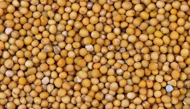 A fehér mustármagot nem igazán ismeri és használja a magyar konyha, pedig Indiában valóságos csodaszerként tartják számon. Ez az olcsó fűszer ugyanis fantasztikusan égeti a zsírt, mindeközben tisztítja az emésztőrendszert. Könnyű betartani! A mustármag a legegyszerűbb diétás szerek egyike, egy zacskó mindössze 200 forintba kerül. Nincs más dolgod, mint reggel és este egy-egy púpozott teáskanállalFolytatás
