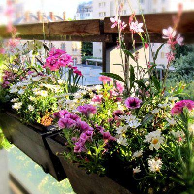 www.fleursaubalcon.com Jardinière fleurie livrée à domicile pour les amoureux de nature au balcon.