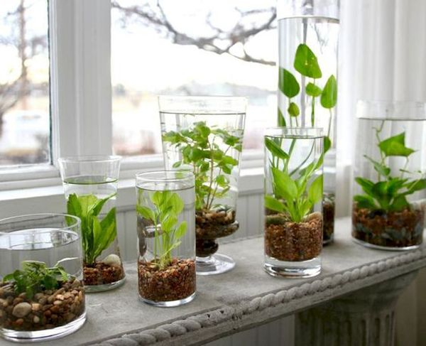 37 Indoor Water Garden Ideas That