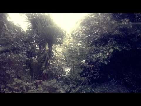 ▶ 1 Minute Rain Trees - YouTube