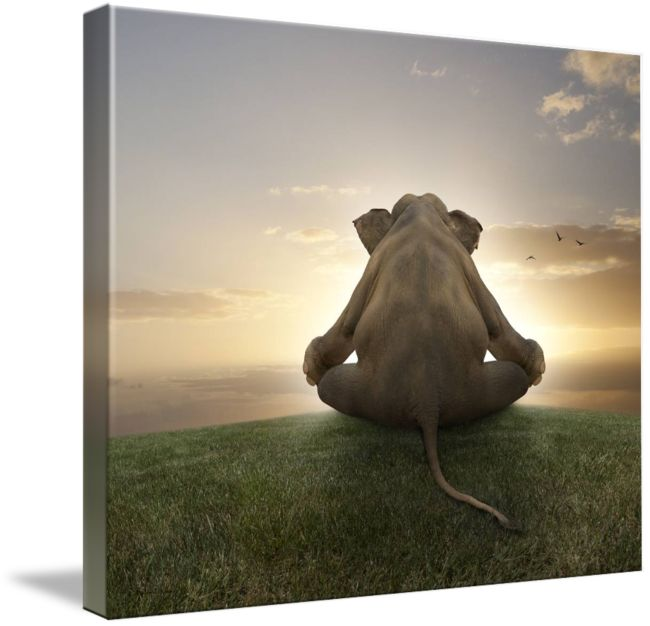 """""""Asian elephant in yoga lotus position meditating"""" by Stephanie Roeser: On a grassy hill at sunset an Asian elephant sits in lotus position peacefully meditating.  This serene image would add a lovely touch to any room."""