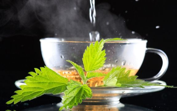 Nettle tea is a wonderful health-boosting herb offering numerous benefits. Start planting some nettle so that you can experience 29 nettle tea benefits.