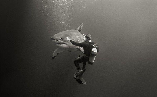 Top 12 des photos qui vont vous faire aimer les requins, le grand bleu en noir…