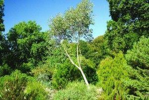 Rosemoor ist der wohl beste regionale Garten im Besitz der Royal Horticultural Society (RHS). Ursprünglich wurde der Garten in den 1960er-Jahren von Lady Anne Palmer angelegt. Viele der besonders reizvollen Pflanzen stammen aus jener Zeit: wunderbare Magnolien, Rhododendren und Zierbäume. http://garten2null.de/2012/02/22/gaerten-der-welt-rhs-garden-rosemoor/