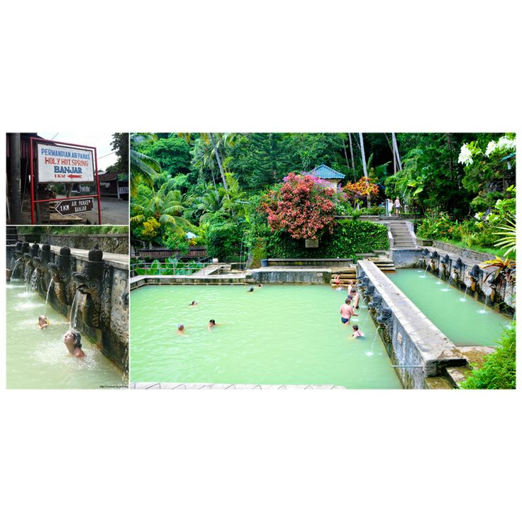 these hot springs percolate amid lush tropical plants. You can relax here for a few hours and have lunch at the restaurant, or even stay the night.  Click on the link to see nearby hotel. http://www.balihotelguide.com/Lovina.aspx  #balihotelguide #balitransport #balipackages #baliinfo #baliaccommodation #balitipsandadvice #balihotel #balivilla #baliresort #vacation #weekend #holy #hot #spring