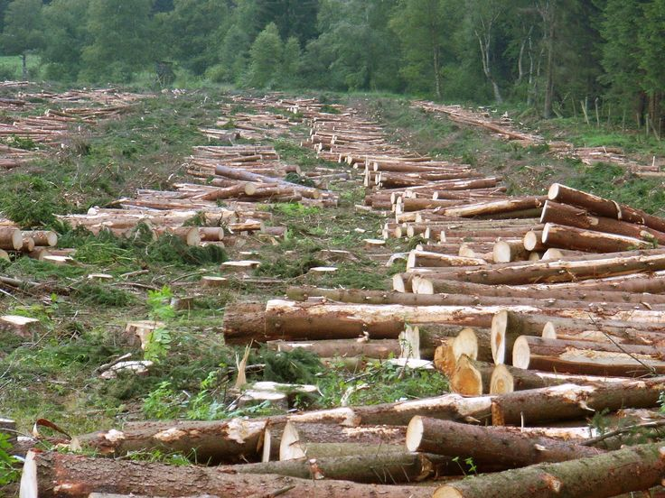 Deforestation means cutting down trees in the forest. So let's see the causes and affects of deforestation in deforestation facts for kids.