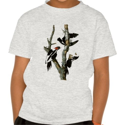 Audubon's Ivory-billed Woodpecker Shirt
