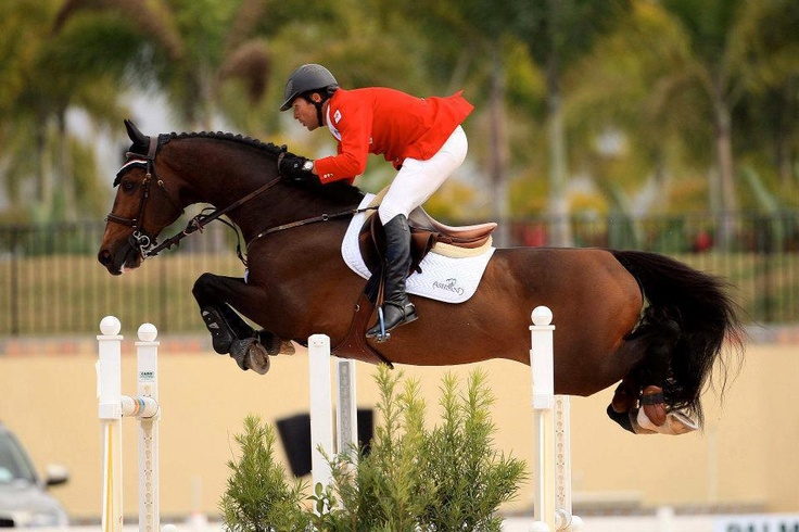 """""""This horse was in the past few years the measure of all things."""" He really was one in a million. Rest in peace, Hickstead."""