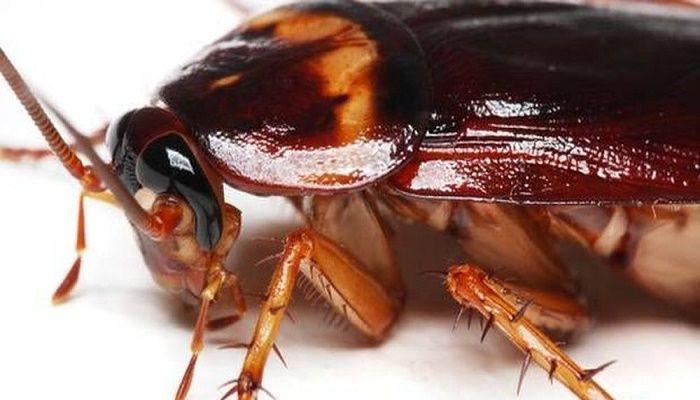Δεν υπάρχει πιο ενοχλητικό και αηδιαστικό έντομο από την κατσαρίδα. Τώρα ειδικά που έχει καλοκαιριάσει για τα καλά, το πιο ανεπιθύμητο έντομο κάνει την εμφ
