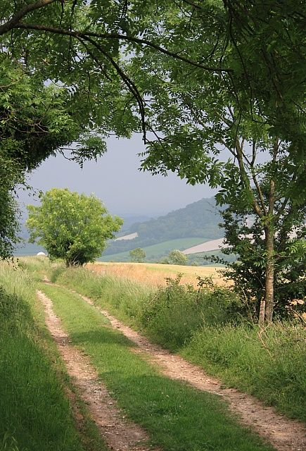 South Downs Way - Chalk Stone trail - part of The Rother Valley Trail, West Sussex, England, UK
