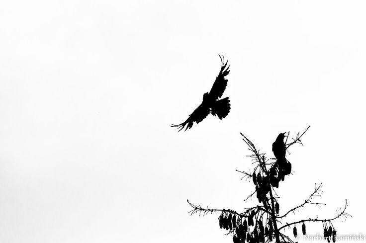 Birds by Norbert Kamiński on 500px