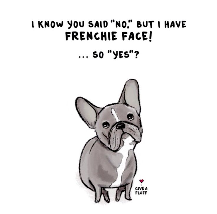 """""""I know you said 'NO', but I have Frenchie Face...so YES"""" ha! French Bulldog Humour, illustration."""