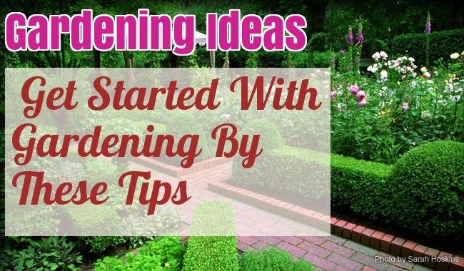 Helpful Advice And Tips On Organic Gardening – Gardening Activities
