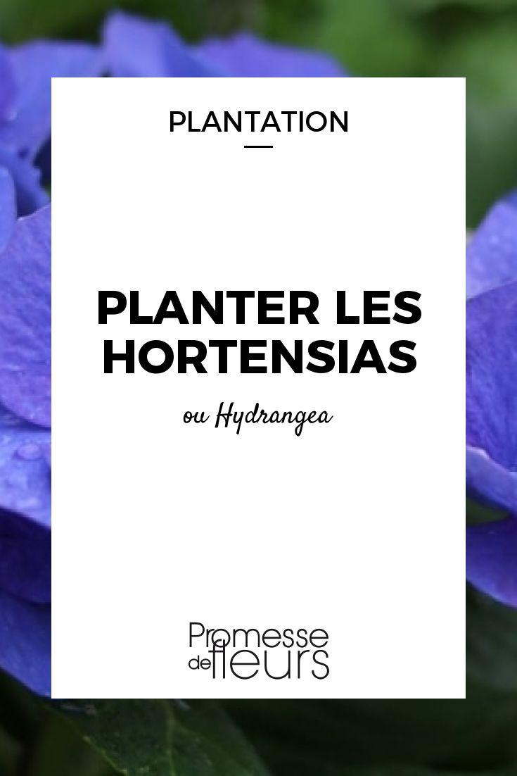 Planter les Hortensias (avec images) | Hortensias, Quand ...