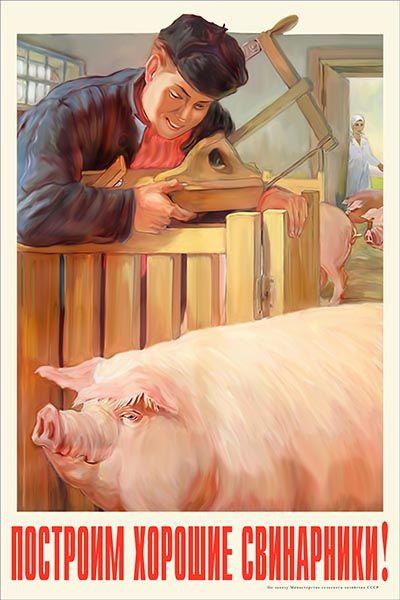 1128. Советский плакат: Построим хорошие свинарники!