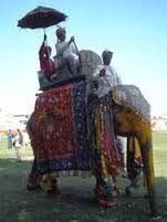 「インド象」の画像検索結果