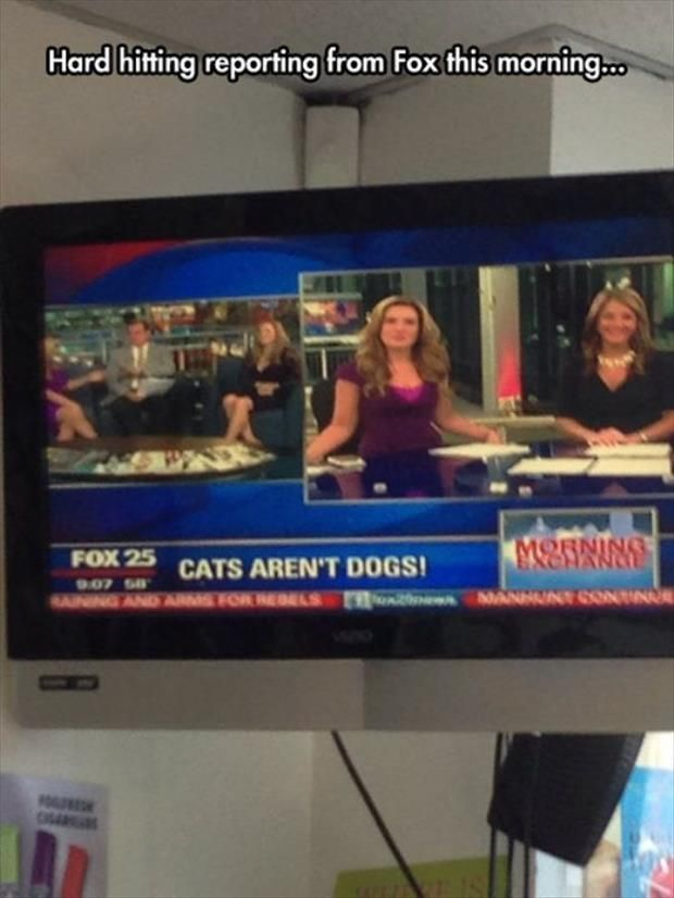"""Dump A Day Meanwhile In The, """"Not So Important"""" News - 30 Pics"""