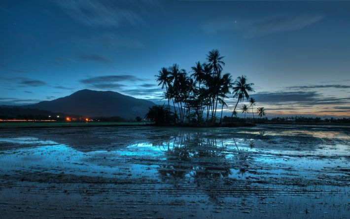 Download wallpapers sunset, darkness, palms, Asia, Malaysia