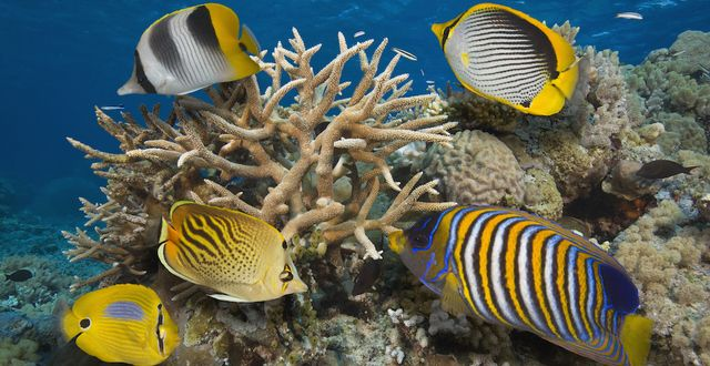 Save the Great Barrier Reef Please take decisive action to ensure The Great Barrier Reef is protected.