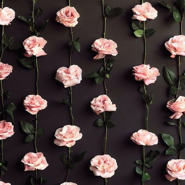 Stop and smell the roses: Our beautiful Rose Tea is rich in antioxidants, uplifting on the nervous system, relieves insomnia and provides support for your immune system. #tea #rose