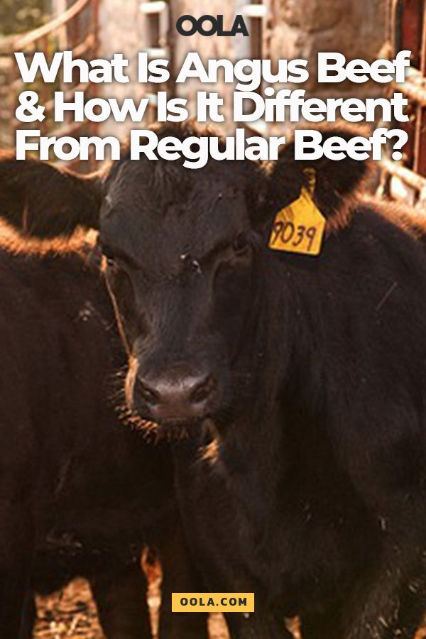 what part of the cow is angus beef