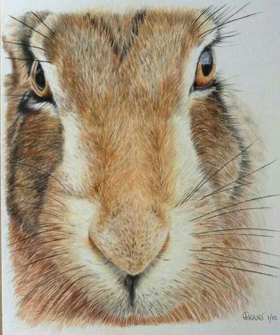 """Keeping watch"" Faber Castell Polychromos drawing"
