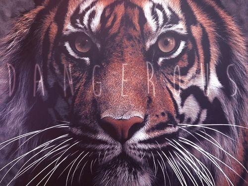 Immagine di tiger, animal, and dangerous