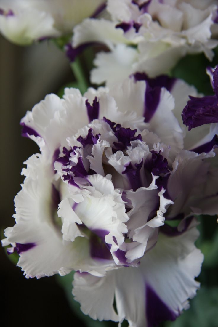 best flower lisianthus images on, Natural flower