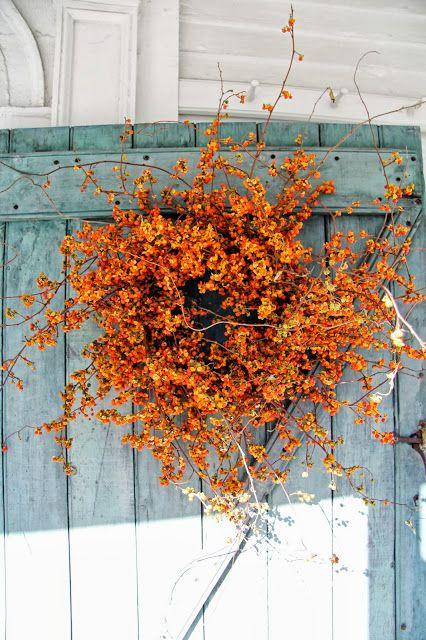 Fall decor of bittersweet looks stunning on a turquoise barn door.