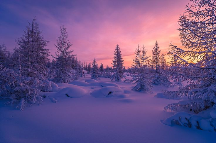 1920x1280 winter forest download wallpapers for pc