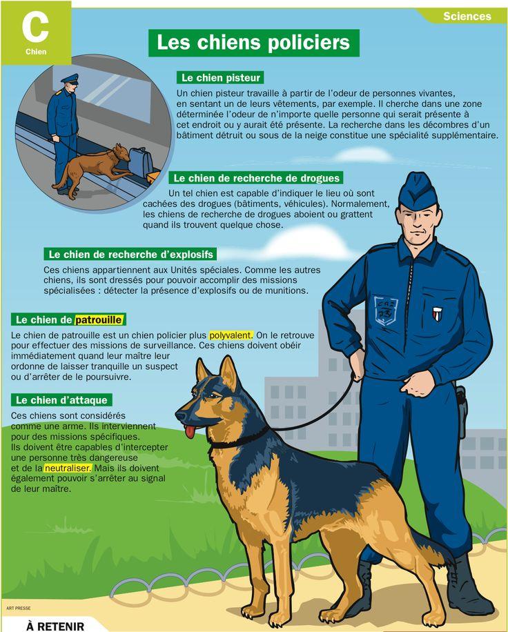 Les 25 meilleures id es concernant chiens de la police sur - Comment utiliser le crottin de cheval au jardin ...