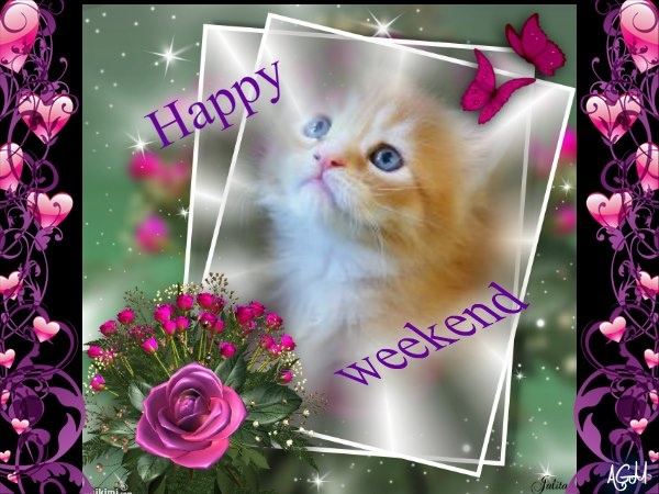 Image result for happy weekend picmix kitties