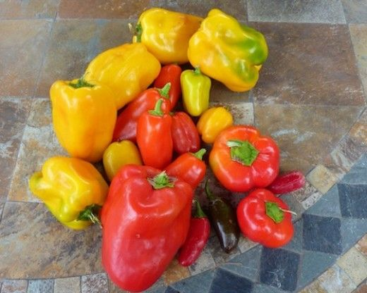 The best mild and sweet peppers choose from the old - Best romanian pepper cultivars ...