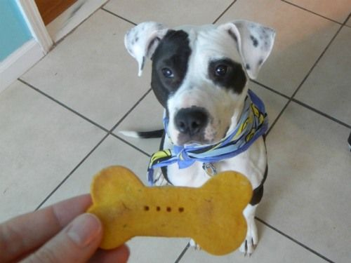 Pumpkin and rice flour dog biscuits