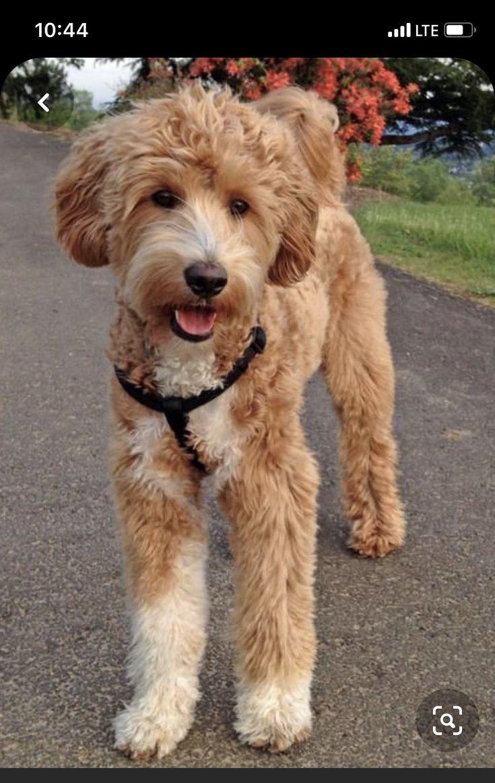 Puppy love grooming markham