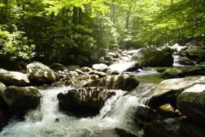 Chimney S Picnic Area Smoky Mountain National Park We