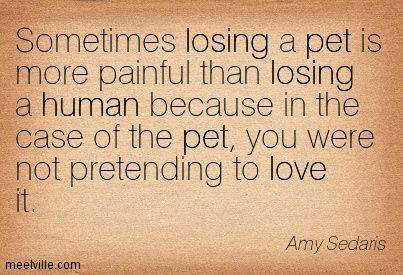 Sometimes losing a pet is more painful than losing a human because in the case of the pet, you were not pretending to love it. Amy Sedaris